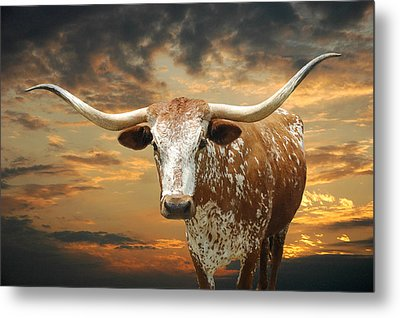 Henly Longhorn Metal Print