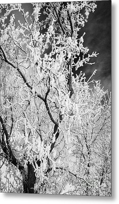 hoar frost on bare tree branches during winter Forget Saskatchewan Canada Metal Print by Joe Fox