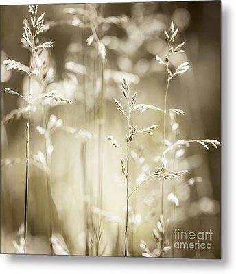 June Grass Flowering Metal Print