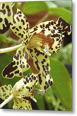 Leopard Orchids Metal Print