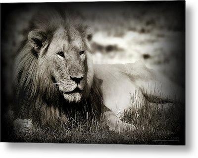 Lion Metal Print by Christine Sponchia