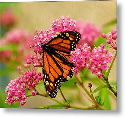 Monarch Butterfly Metal Print by Carol Toepke