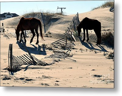 Outer Banks Wild Horses Metal Print