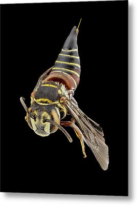 Parasitic Bee Metal Print by Us Geological Survey