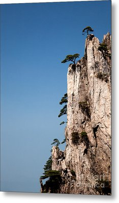 Pine Trees On Huangshan Mountain China Metal Print by Fototrav Print