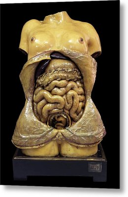 Pregnancy Model Metal Print