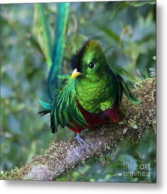 Quetzal Metal Print by Heiko Koehrer-Wagner