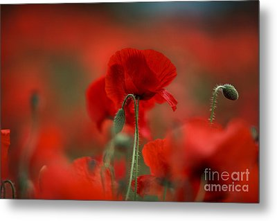 Red Metal Print by Nailia Schwarz