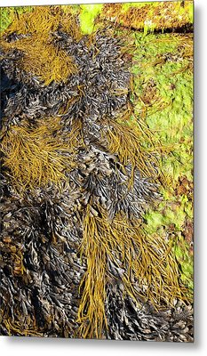 Rock Formations At The Bay Of Laig Metal Print by Ashley Cooper