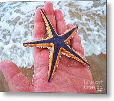 Royal Starfish - Ormond Beach Florida Metal Print by Melissa Sherbon