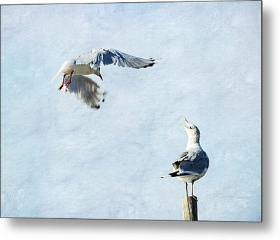 Seagulls Metal Print by Heike Hultsch