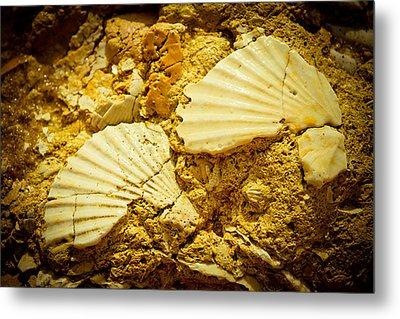 Seashell In Stone Metal Print by Raimond Klavins