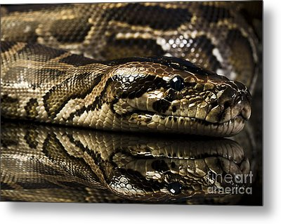Metal Print featuring the photograph Snake by Gunnar Orn Arnason