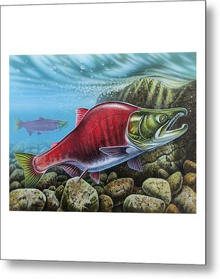 Sockeye Salmon Metal Print by JQ Licensing