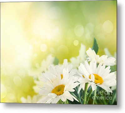 Spring Background Metal Print by Mythja  Photography