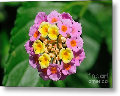 Spring Flowers Metal Print by George Atsametakis