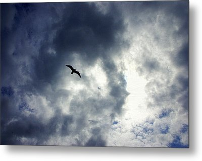 Metal Print featuring the photograph Storm Flyer by Marilyn Wilson