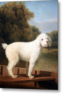 Stubbs' White Poodle In A Punt Metal Print
