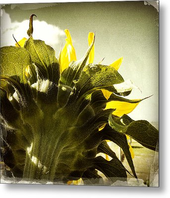 Sunflower Metal Print by Les Cunliffe