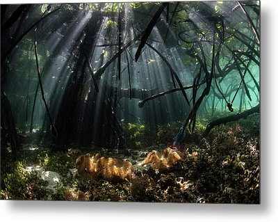 Sunlight Shines Into A Blue Water Metal Print