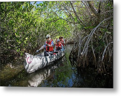 Tourists Canoeing In Mangrove Swamp Metal Print