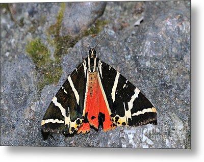 Valley Of Butterflies In Rhodes Island Metal Print