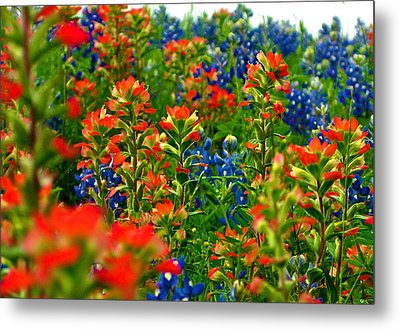 Metal Print featuring the photograph Wildflowers by John Babis