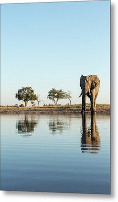 Africa, Botswana, Chobe National Park Metal Print by Paul Souders