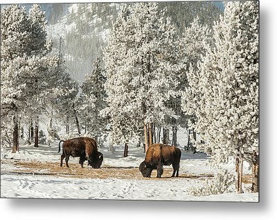 Usa, Wyoming, Yellowstone National Park Metal Print by Jaynes Gallery