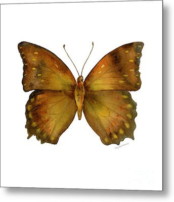 34 Charaxes Butterfly Metal Print by Amy Kirkpatrick