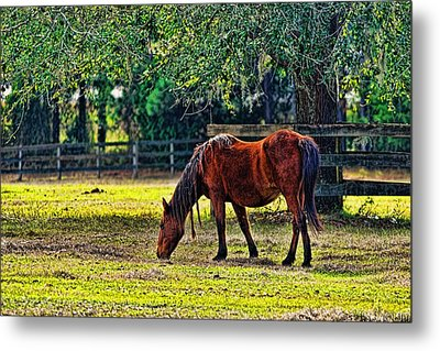 Metal Print featuring the photograph 3489-200 by Lewis Mann