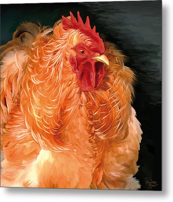 36. Frizzled Buff Cochin  Metal Print