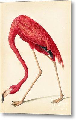 American Flamingo Metal Print