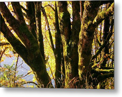 Autumn 3 Metal Print by J D Owen