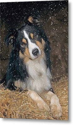 Border Collie Dog Portrait Metal Print by Olde Time  Mercantile