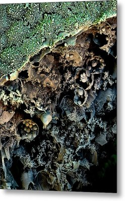 Broccoli Metal Print by Stefan Diller