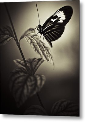 Butterfly Brown Tone Metal Print by Bradley R Youngberg