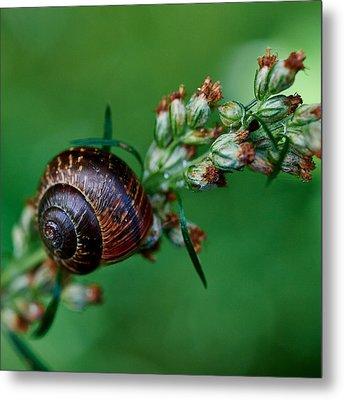 Copse Snail Metal Print by Jouko Lehto