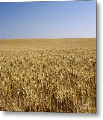 Field Of Wheat Metal Print by Bernard Jaubert