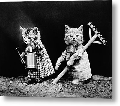 Frees Kittens, C1914 Metal Print