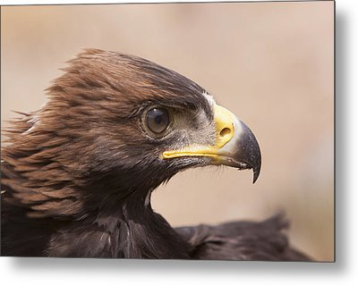 Metal Print featuring the photograph Glaring Eagle by Jim Snyder
