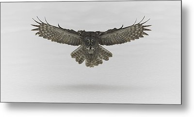 Great Grey Owl In Flight Metal Print