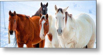 4 Horses Metal Print