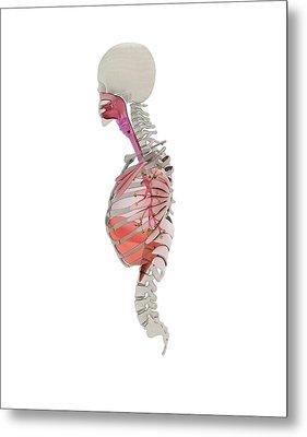 Human Respiratory System Metal Print by Mikkel Juul Jensen