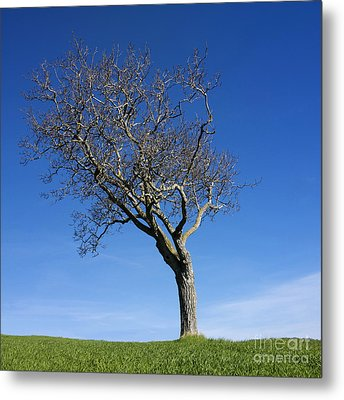 Isolated Tree Metal Print by Bernard Jaubert