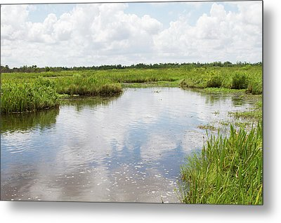 La, Lafitte, Airboat Swamp Tour Metal Print by Jamie and Judy Wild