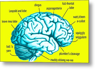 Learn About Your Brain Metal Print by Del Gaizo