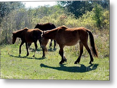 Outer Banks Wild Horses Metal Print by Mike Baltzgar
