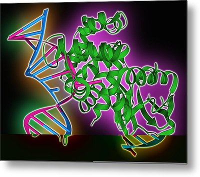 Oxoguanine Glycosylase Complex Metal Print by Science Photo Library