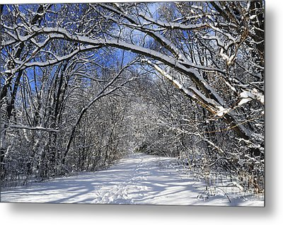 Path In Winter Forest Metal Print